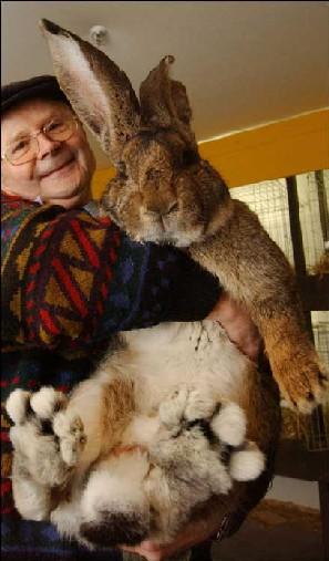 pet_bunny