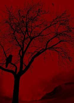 Black Bird Red Sky