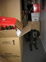 Sam and the boxes