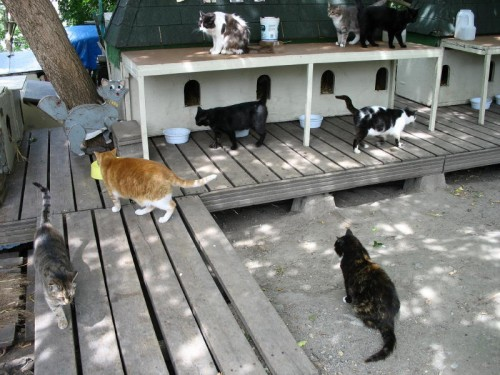 The Parliament Hill Cat Colony