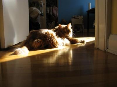 Duncan basking in a sunbeam
