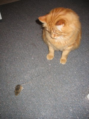 Duncan and his Mouse