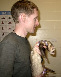 Ferret Man with Ferret