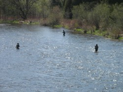 Anglers on the Grand River