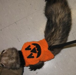 Halloween ferret checking out my shoe