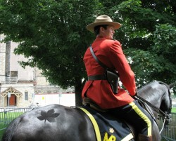 Ike, The Parliament Hill Horse