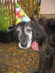 Sam the birthday dog