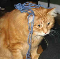 It's true what they say about cats and yarn