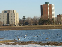 New lake emerges between the Civic Hospital and the Experimental Farm