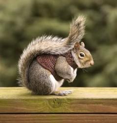 squirrel in a sweater