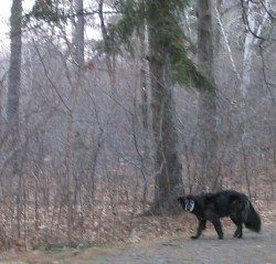 Me, out in the woods